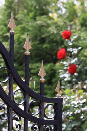 Img_0165rose_gardenrosegarden