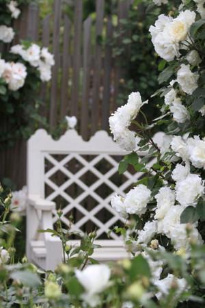 Img_0205rose_gardenrosegarden