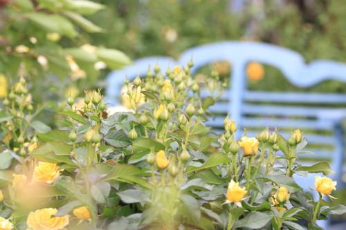 Img_0220rose_gardenrosegarden