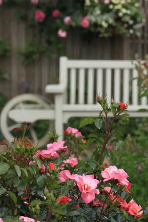 Img_0286rose_gardenrosegarden