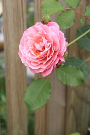 Img_0314rose_gardenrosegarden