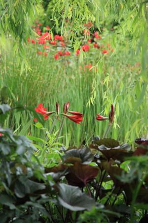 Img_0321rose_gardenrosegarden