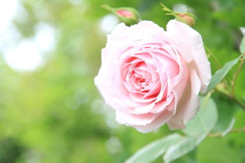 Img_0338rose_gardenrosegarden