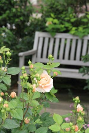 Img_0346rose_gardenrosegarden
