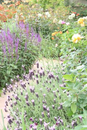 Img_0349rose_gardenrosegarden