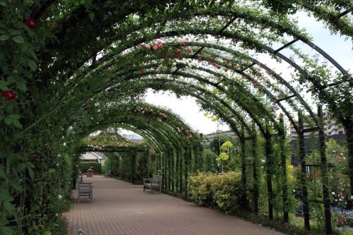Img_0362rose_gardenrosegarden